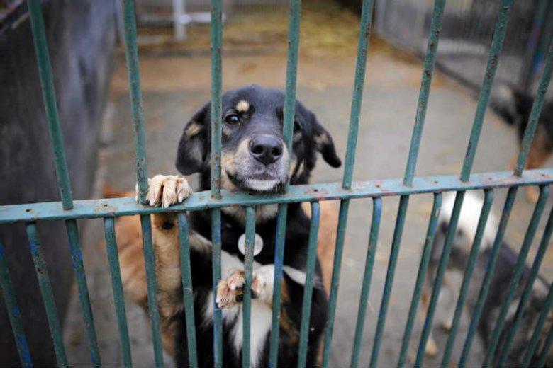 """Prokuratura oskarża szefową Fundacji """"Ludzie Zwierzętom w Potrzebie"""" o znęcanie się nad psami i kotami."""