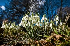 Powoli zbliża się wiosna