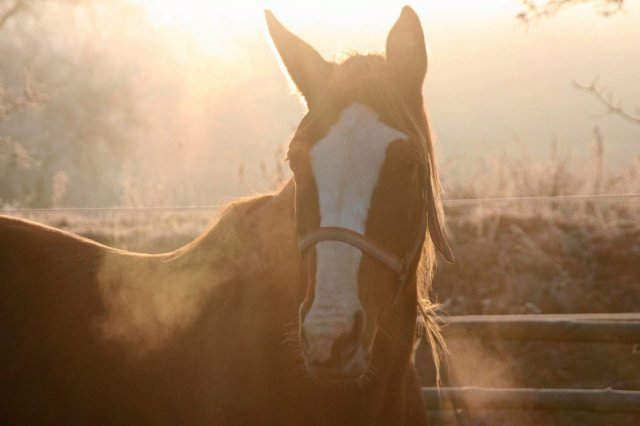 Koń ze schroniska Tara