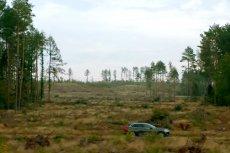 Volvo już po raz trzeci przygotowało wypożyczalnię choinek. Po świętach każde drzewko zostanie ponownie zasadzone.