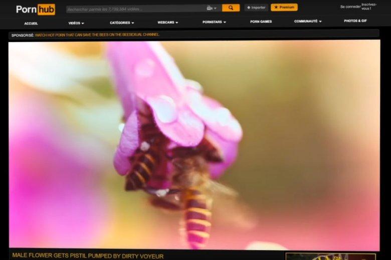 Pszczele porno ma pomóc pszczołom.