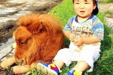 Filmiki z Farmy Suetoshi są bardzo popularne na Facebooku.