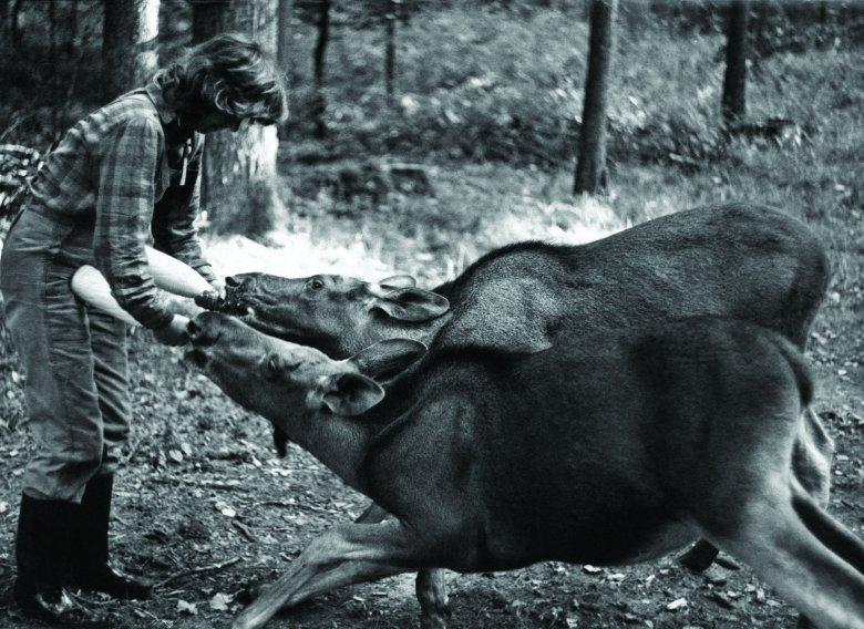 Dla zwierząt była jak matka. Na zdjęciu z łosiami bliźniakami, które Kossakówna nazywała Cola i Pepsi.
