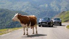 Tak prezentuje się nowe Audi SQ8. I francuska krowa.