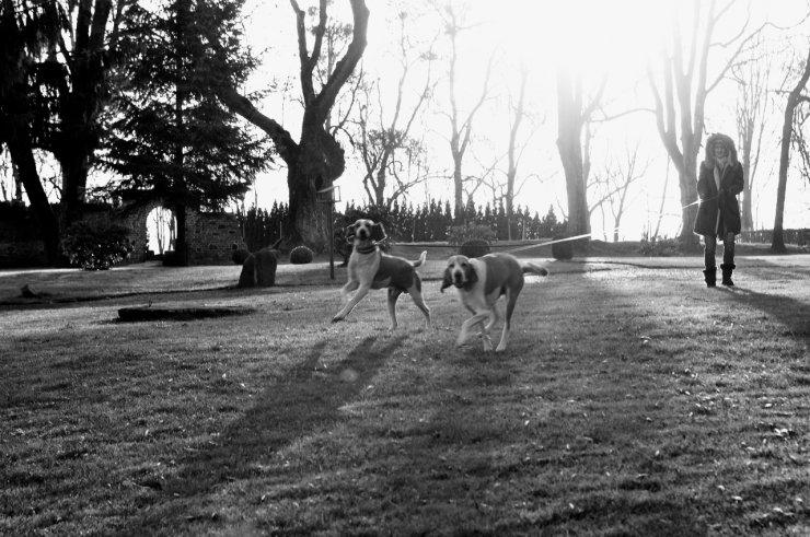 Joanna na spacerze z psami