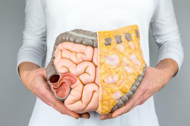 W naszym przewodzie pokarmowym żyje niezliczona ilość drobnoustrojów.