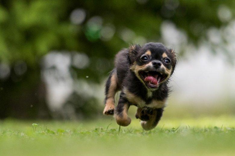 Hałasy mogą sprawić, że nawet grzeczny i spokojny zwierzak, spłoszy się i ucieknie