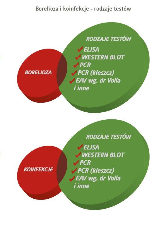 borelioza i koinfekcje - rodzaje testów