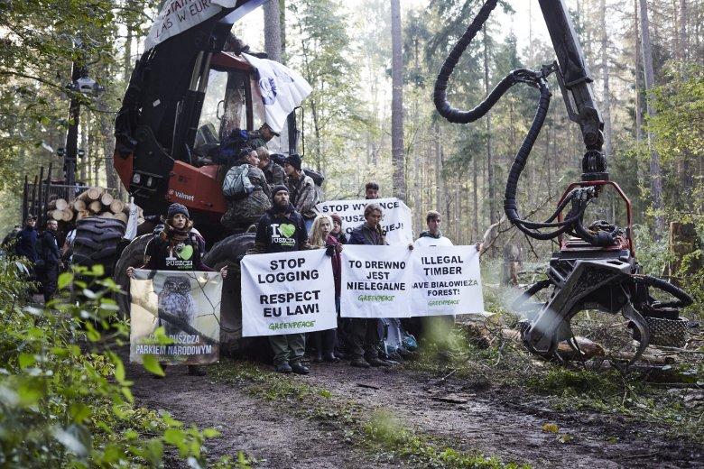 Blokada nielegalnej wycinki w Puszczy Białowieskiej. W blokadzie brali udział aktywiście i aktywistki z kilkunastu państw.
