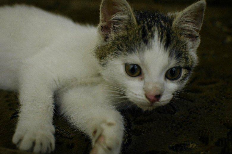 Kot ParKitek zamieszkał w częstochowskim szpitalu.