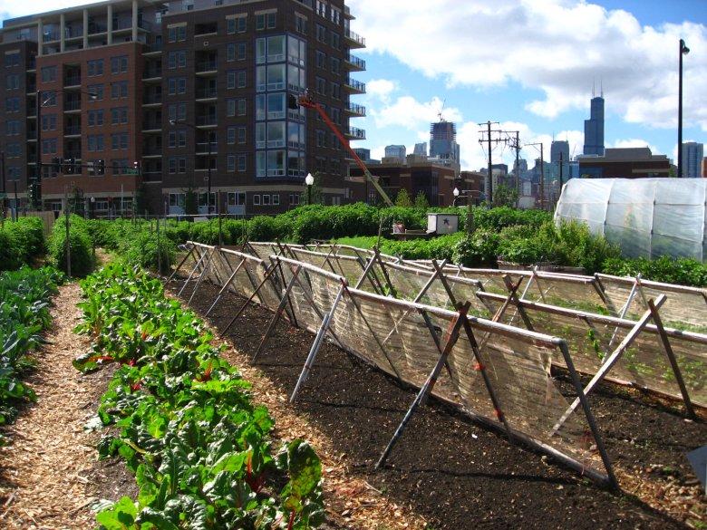 Miejski ogród w Chicago w 2008 roku.