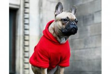 tropiciel trendów - król Neon (oczywiście w ubraniu Neon for Dogs)