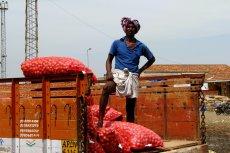W Indiach nawet dochodzi do napadów na transport cebuli