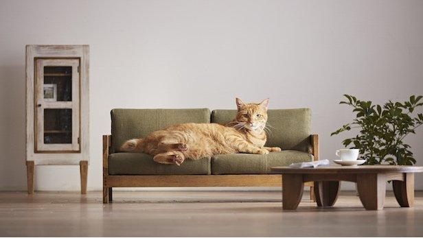 Małe mebelki dla kocich ulubieńców zostały zaprojektowane jako miniaturki dużych, które na co dzień stoją w naszych mieszkaniach.
