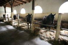 Finansowa katastrofa stadnin koni spowodowana jest... suszą.