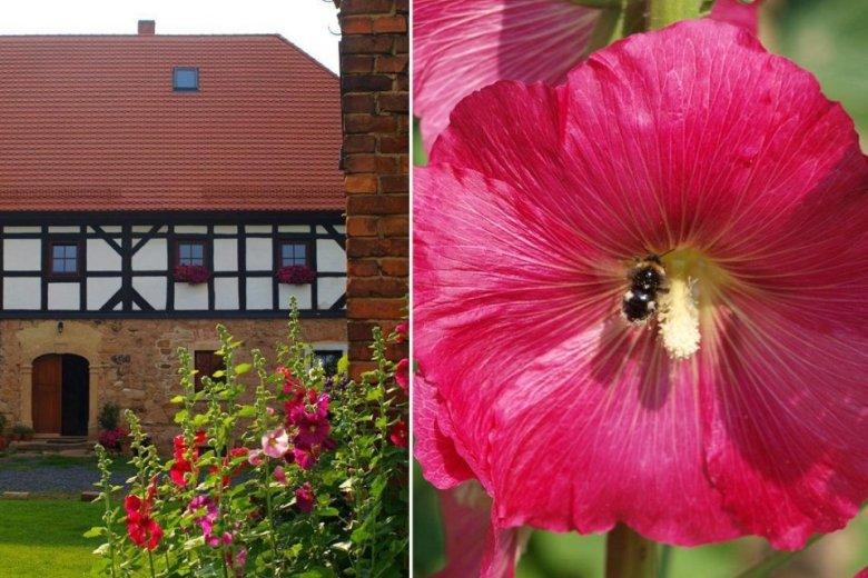 Dom miał 200 lat i dzięki obecnym gospodarzom przeszedł pierwszy od wojny remont.
