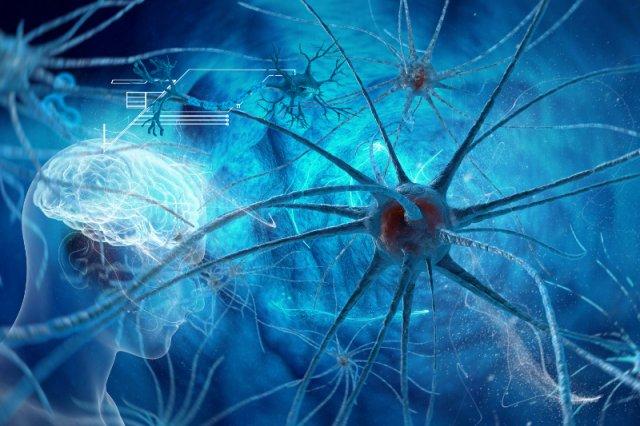 Otyłość wpływa na niszczenie synaps?