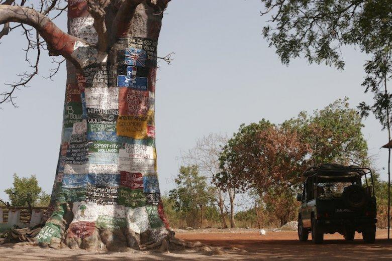 """Baobaby zwane są tu z przymrużeniem oka """"drzewami internetowymi"""". Na gładkim pniu można napisać ogłoszenie."""