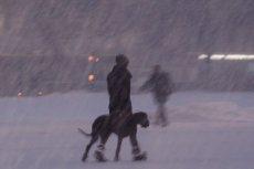 Gdzie ta wiosna? Na święta synoptycy zapowiadają opady śniegu i silny wiatr.