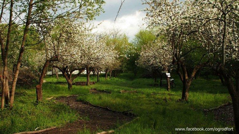 W ogrodzie społecznościowy na warszawskim Bemowie znajdziemy nie tylko sad owocowy, ale też pasieki i uprawiane przez mieszkańców grządki warzywne.