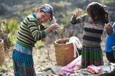 Czemu Azjatki zawdzięczają wyjątkowo gładkie, gęste i długie włosy? Tajemniczym składnikiem, który od wieków stosują do naturalnych płukanek, jest zwykły ryż.