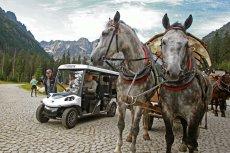 Protest przeciwko wykorzystywaniu koni w transporcie na Morskie Oko odbędzie się w niedzielę.