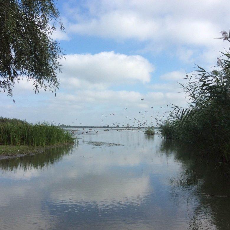Delta Dunaju, okolice wyspy Uzlina, Rumunia