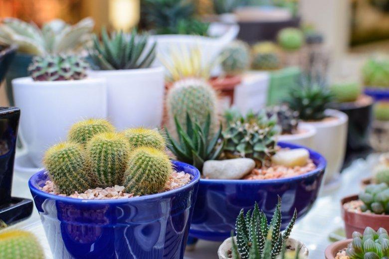 W twoim mieszkaniu utrzymują się jakieś rośliny poza kaktusami? NAPRAWDĘ dojrzewasz.