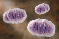Mitochondria są biologicznymi ''elektrowniami'' komórek w ludzkim organizmie. Bez nich nie przetrwalibyśmy nawet 5 minut