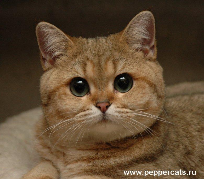 Ryc. 1. Helia Pappercats
