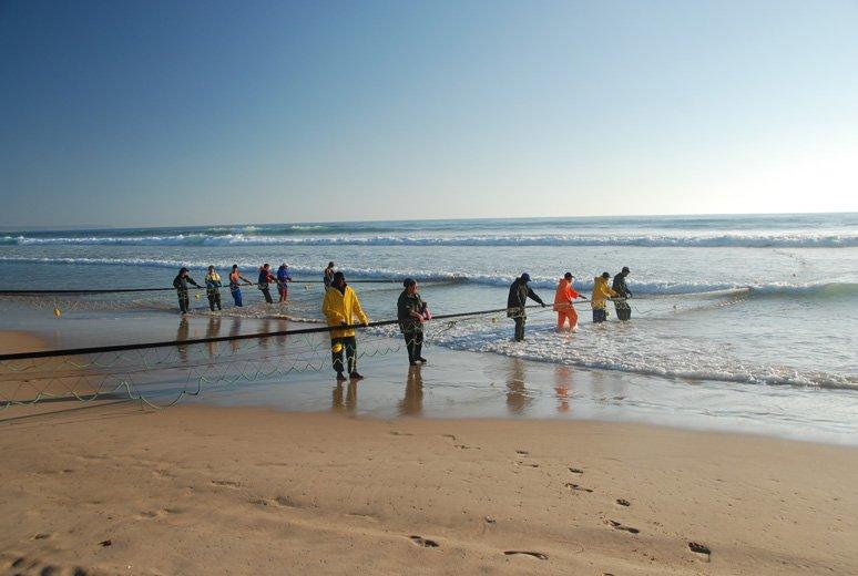Technika xávega, Costa da Caparica, Północny Atlantyk, a sieci drobne ryby pelagiczne, przede wszystkim sardynki, ostroboki i makrele.