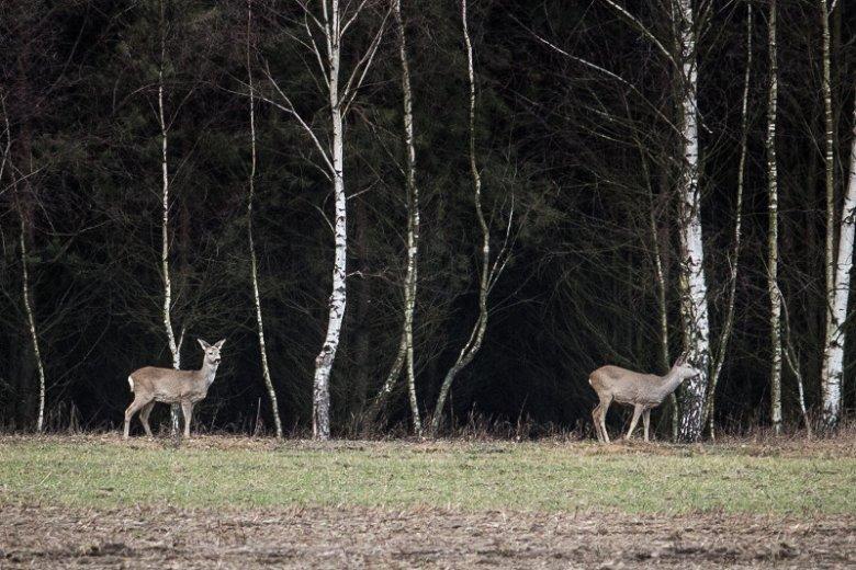Myśliwi deklarują, że polowanie to nie rozrywka