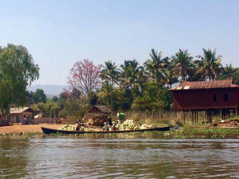Łodzie przewożą niekiedy ogromne, ciężkie towary. Jezioro Inle/Birma