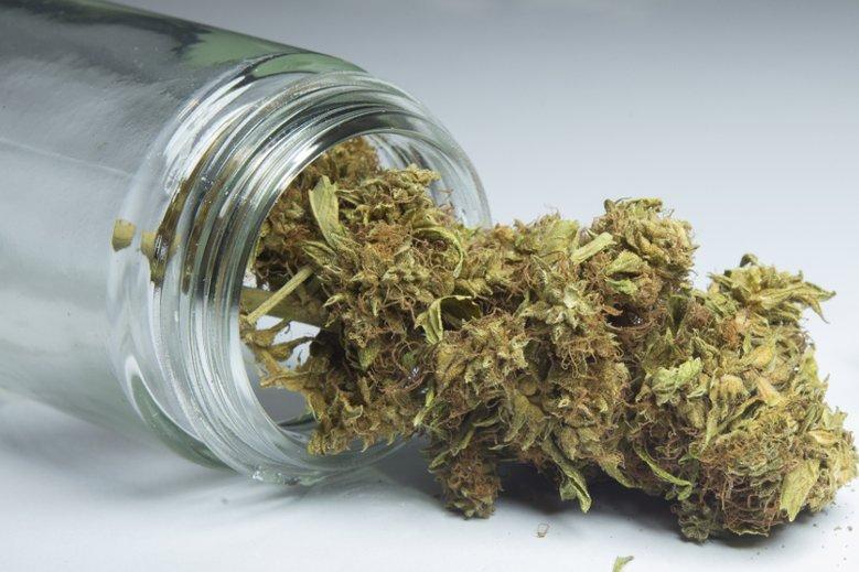 Narkotykowy susz w transporcie mandarynek znaleźli policjanci i celnicy.