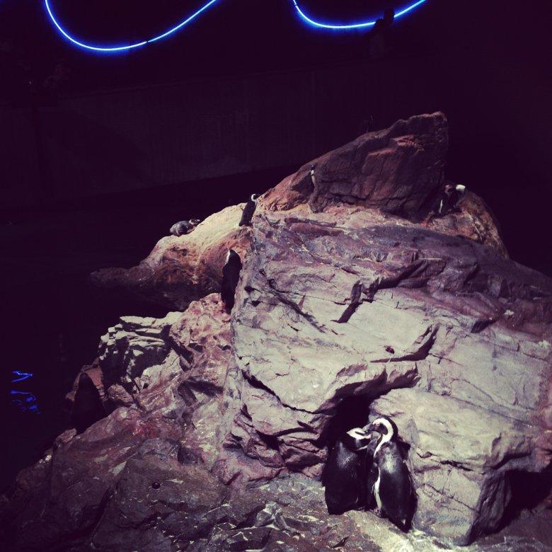New England Aquarium - przyjemna alternatywa na zbyt zimną pogodę na zwiedzanie miasta. Można dotknąć rekina!