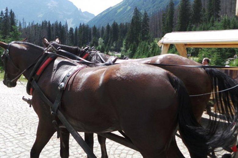 Na drodze do Morskiego Oka padł koń, który w zaprzęgu wiózł turystów