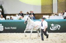 Wiceprezes ANR zrezygnował ze stanowiska na chwilę po nieudanej aukcji klaczy Emiry w Janowie Podlaskim.