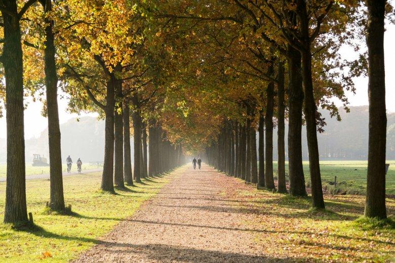Większość drzew zanim zrzuci liście wycofuje z nich chlorofil, żeby nie musieć produkować go powtórnie wiosną. Między innymi dlatego liście zmieniają jesienią kolor.