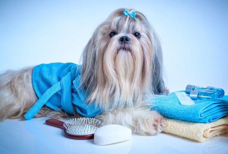 Pomalowane pazury, piżama i wymyślne fryzury naprawdę nie są naszym psom potrzebne do szczęścia.