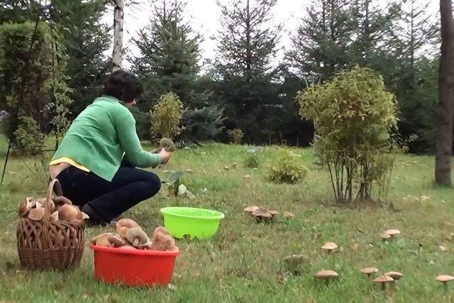 Po co chodzić do lasu, kiedy można sprawić, że grzyby wyrosną w przydomowym ogródku