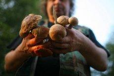 Polacy uwielbiają zbierać grzyby. Gdzie można znaleźć ich najwięcej w 2019 roku?