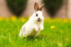 Jesteś orędownikiem praw zwierząt? Poznaj firmy, które nie testują swoich kosmetyków na zwierzętach