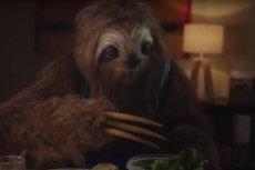 Nie napisze tekstu, nie poda sałatki i nie pogada – leniwiec, będący uosobieniem osoby po zażyciu marihuany pokazuje skutki zażywania tego specyfiku.