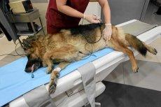 Ubezpieczenia zdrowotne dla zwierząt domowych stają się coraz popularniejsze.