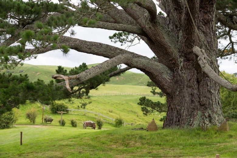 Ogromne drzewo w Hobbiton Movie ustawiony, Matamata, North Island, Nowa Zelandia