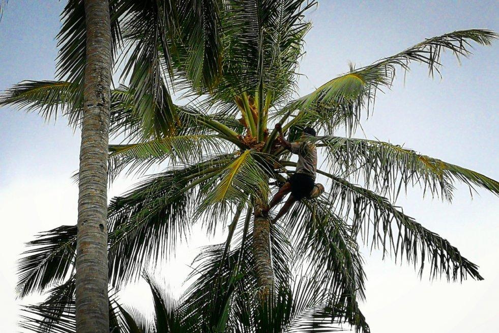 Wakacje na Malediwach to dla turystów raj. Rajskie nie są jednak zarobki tamtejszych pracowników.
