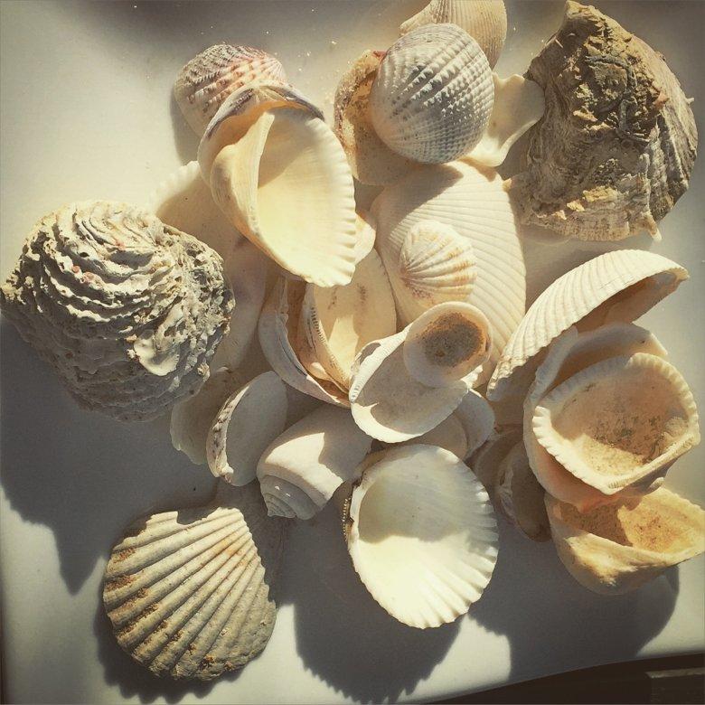 Muszle na plaży w zatoce Ninh Van Bay