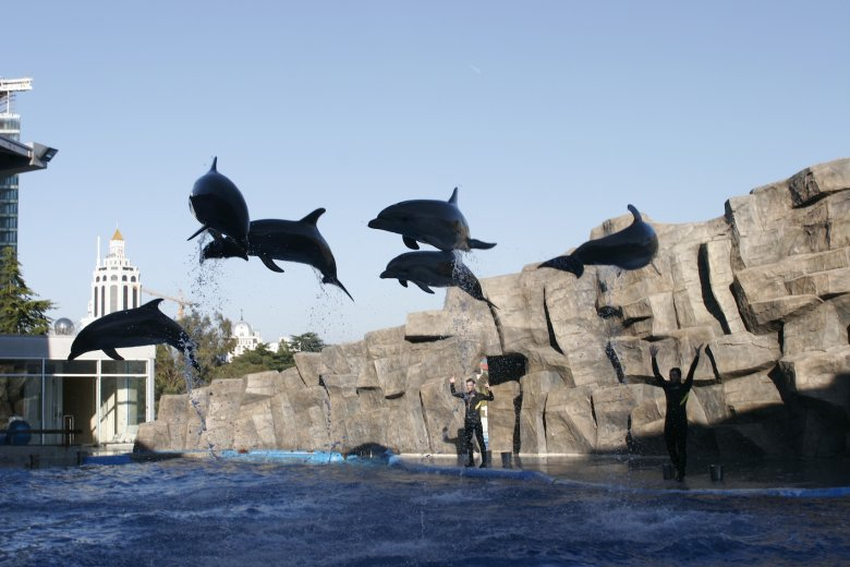 Popis delfinów w Batumi.