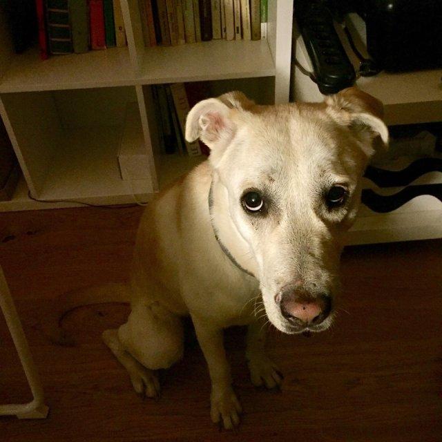 Słodki psiesek z miną zbitego pieska, i to dosłownie, bo dostał od życia porządnie w kość.