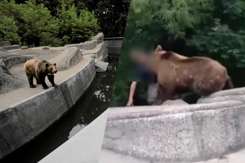 PIjany mężczyzna wpadł w warszawskim zoo do wybiegu dla niedźwiedzi.